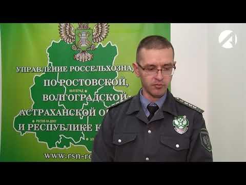 Под контролем Управления Россельхознадзора с начала года отправлено на экспорт с территории Астраханской области более полутора тысяч тонн рыбы и рыбной продукции
