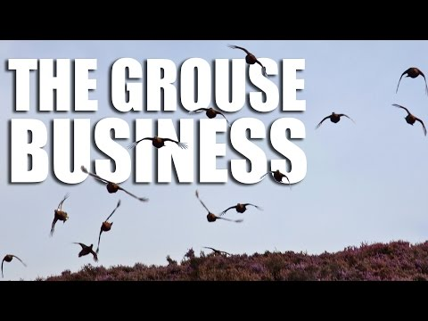 The Grouse Business