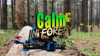 Calm in forest - FPV TENERIFE