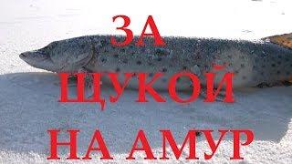 Зимняя рыбалка на амуре фото