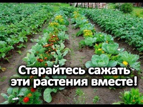 , title : 'Старайтесь сажать эти растения вместе!