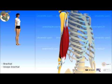 Dove cura della caviglia artrosica