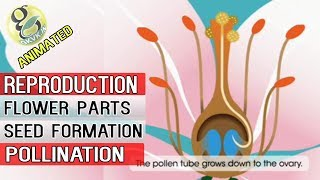 How Are Seeds formed?  Animated POLLINATION and FERTILIZATION Tutorial - Botany