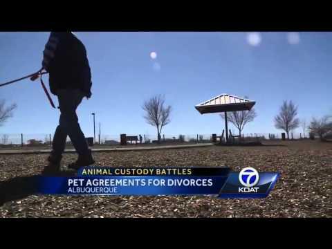 Lawyers seeing more pet custody battles