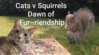 Cats v Squirrels: Dawn of Fur-riendship ~ Entertaining Videos For Pets