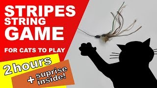 Cat Games: 2 Hours! (Surprise Inside)