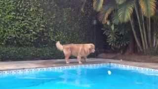 Simba testa a plataforma Savedog