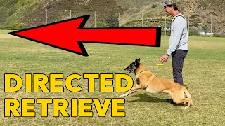 Directed Retrieve Dog Obedience Training