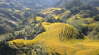 Longsheng Rice Terraces (Longji) - China