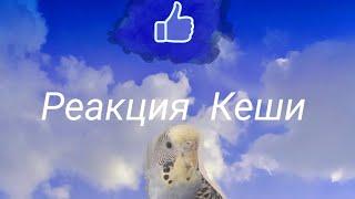 Реакция Кеши на новую жёрдочку💙