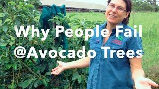Why People Fail at Avocado Trees