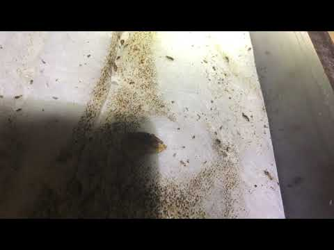 Abandoned Unit Littered with Cockroaches in Neptune, NJ