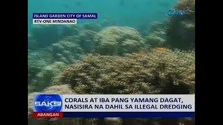 Saksi: Corals At Iba Pang Yamang Dagat, Nasisira Na Dahil Sa Illegal Dredging