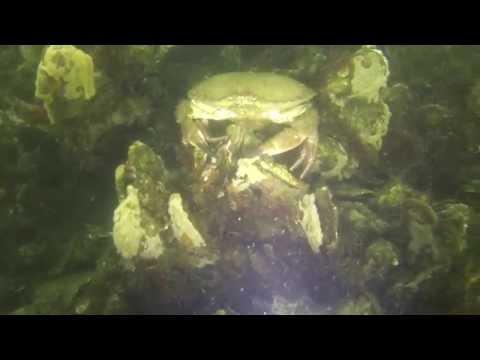 Tauchen im Grevelinger Meer, Grevelinger Meer: Tauchplatz Koppeltje,Niederlande
