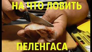 Ловля пеленгаса на азовском море с берега снасти