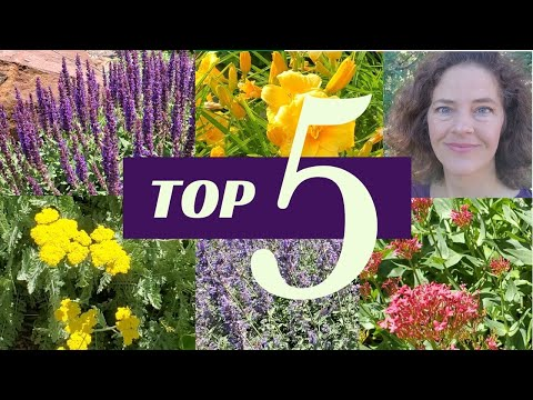 , title : 'Top Five Easy Care Flowers for Your Garden (Great for Beginners!)