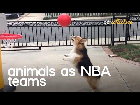 Animals As NBA Teams