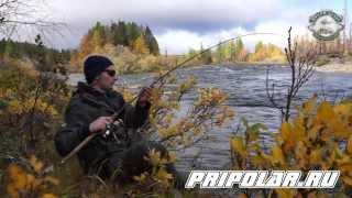 Как ловить хариуса на реках полярного урала