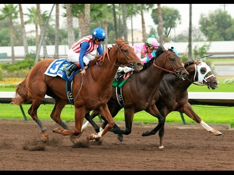 2015 Los Alamitos Futurity Preview Mike S Derby Picks