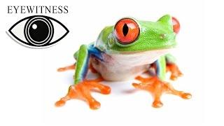 EYEWITNESS | Amphibian | S1E1