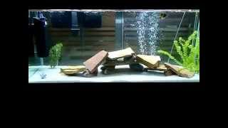 fish tank is cloudy (1:50 watch this get clear!) Awesome!