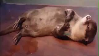 Приколы с животными до слез./Fun with animals to tears./Животные отжигают.
