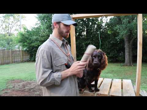 , title : 'Force Fetching your Boykin Spaniel (Training Tula 005)