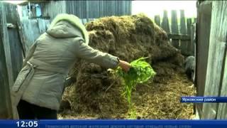 Владельцы ЛПХ выращивают необычные породы домашнего скота
