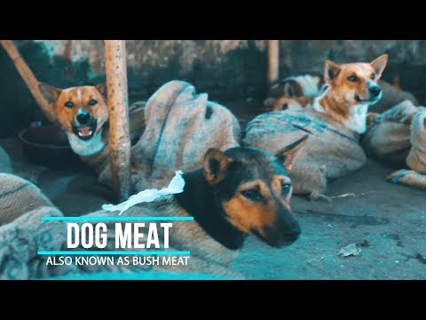 Dog Meat Market Nagaland India | Hornbill Festival 2017 | Vlog 3.1 | Peppy Traveller
