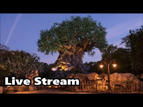 Animal Kingdom 360 Live Stream - 2-2-18 - Walt Disney World (видео)