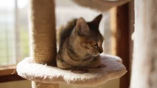 アトリエイエネコ Cat Photographer mqdefault YouTube
