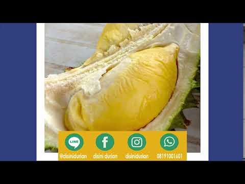 081910081601 durian vector sop duren lodaya bogor durian bakar durian qoute