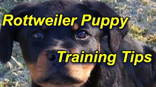 How to train a Rottweiler Puppy