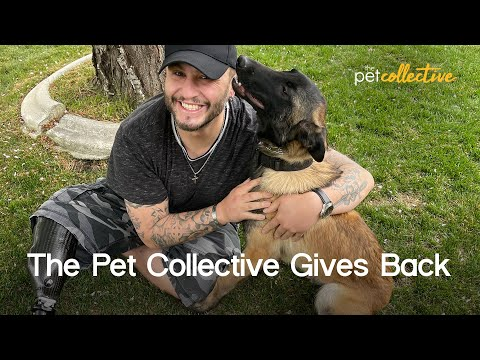 Helping A Marine Corps Vet & His Service Dog | The Pet Collective Gives Back