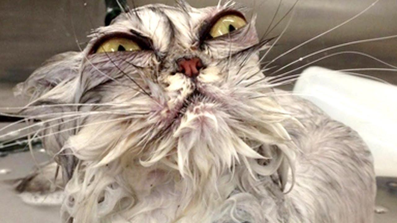 The Most Awkward Cats of 2013 thumbnail