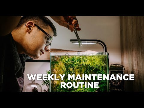 Nano aquariums WEEKLY MAINTENANCE ROUTINE - My 4 beautiful nano tanks
