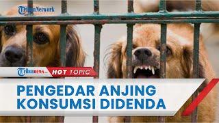 Selundupkan 78 Anjing untuk Dikonsumsi, Pria Asal Sragen Divonis Penjara 10 Bulan