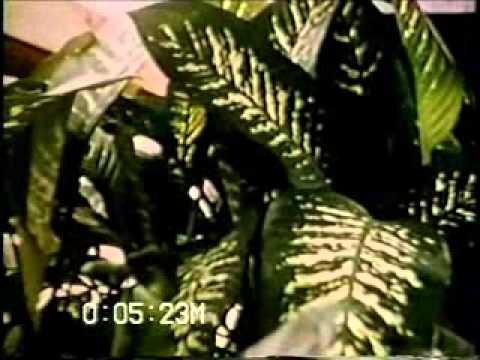 Archival footage of Sanford, FL