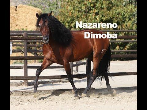 Nazareno Dimoba - Septiembre de 2018