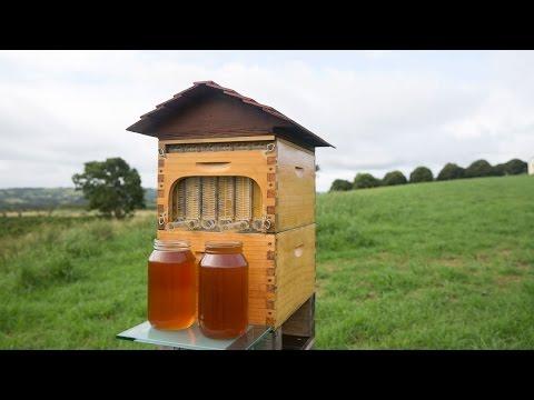 Točený med přímo z úlu