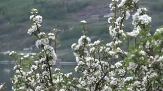Hardanger Mai 2017  -  Lofthus