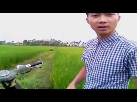 Video trên tay xe cúp chở cỏ
