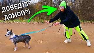 Эксперимент с закрытыми глазами! Куда поведут меня собаки? Опасный челлендж Доведет ли собака домой?
