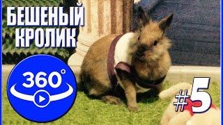 Бешеный кролик. Видео 360 градусов.