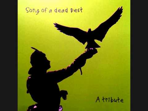 Song of a Dead Pest - Cardiacs cover.