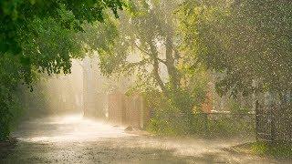 Sonido de Lluvia Relajante para Dormir | Sonidos Relajantes de la Naturaleza para Dormir, Estudiar
