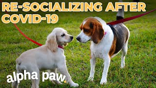How To Socialize Your Dog After Covid-19
