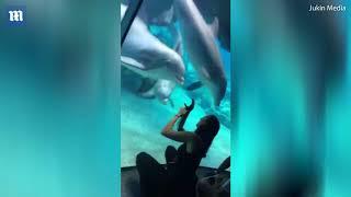 Любопытный дельфин заинтересовался бионической рукой женщины • AmpGirl