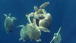 Sea Turtles (HD) | JONATHAN BIRDS BLUE WORLD
