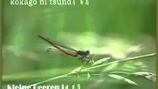 Die rote Libelle // 赤とんぼ